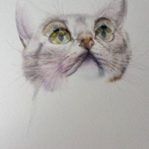 一分钟手绘大赛##超写实##手绘彩铅画##动物##猫##手绘插画##喵星人
