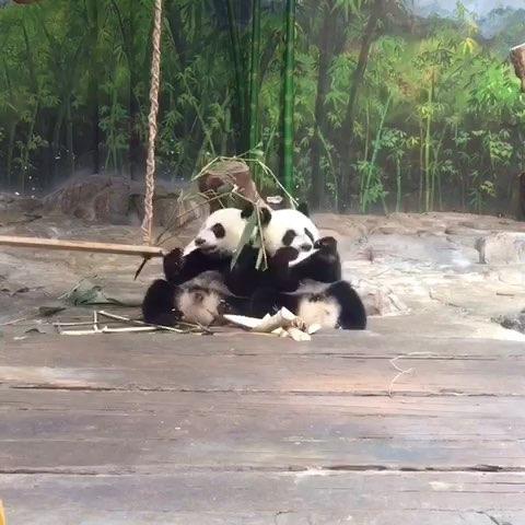 熊猫矢量图跑步