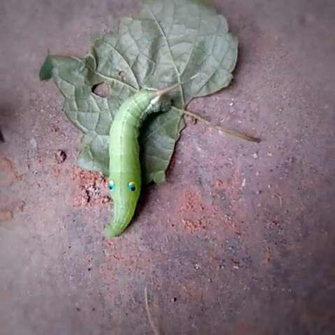 壁纸 动物 昆虫 桌面 蜥 蜥蜴 480_480