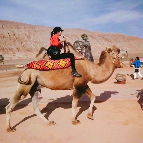 壁纸 骆驼 沙漠 桌面 480_480