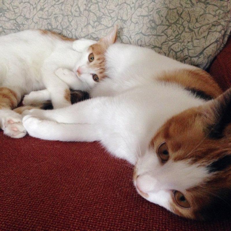 动物吃饭睡着的的图片