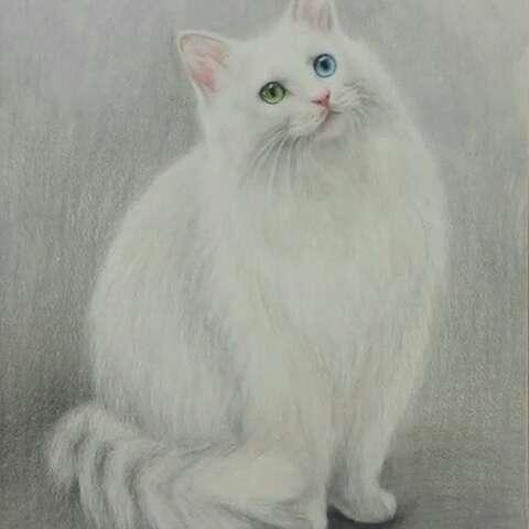 照片电影##手绘彩铅画#鸳鸯眼美猫【八小小】.这张自留.勿免费索画.