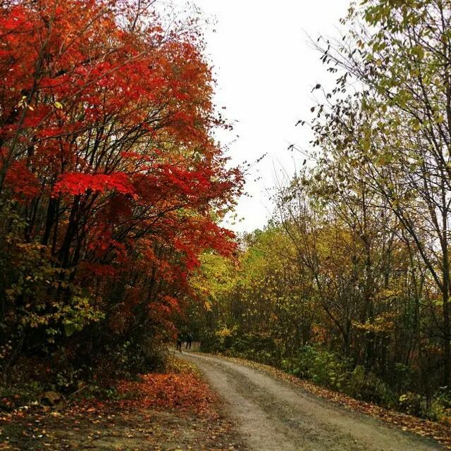 在路上##随手美拍##秋天的气息秋天的色彩秋天的尾巴#秋天的景色真是