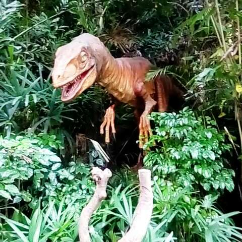 (四)长隆野生动物园一日游.侏罗纪世界.一走进去,森林