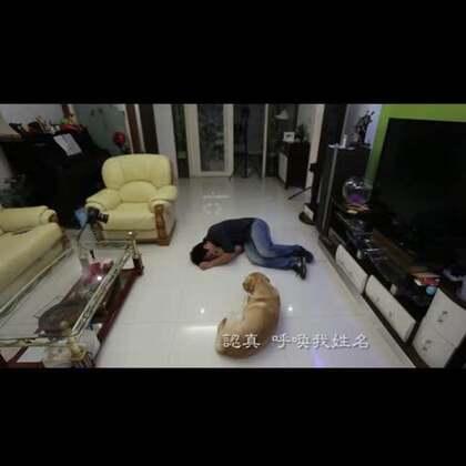 #宠物#单纯的狗狗以为主人睡着了,但是后来慢慢开始了担心。。。他的世界只有你,好感动!💘