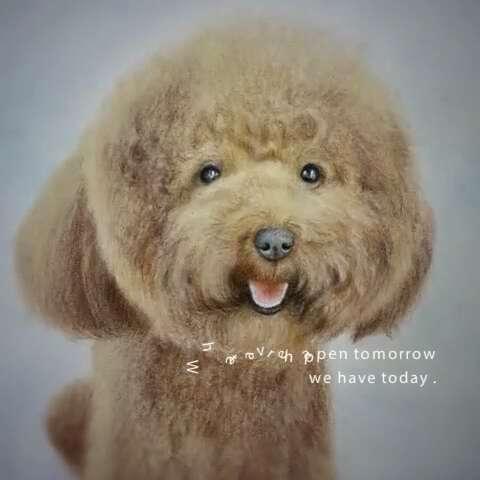 手绘彩铅画#可爱泰迪狗狗手绘.过程图看照片电影