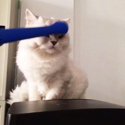 搞笑##宠物#猫咪按摩
