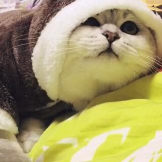 #宠物装扮大赛#圣诞节快到啦。麋鹿装~