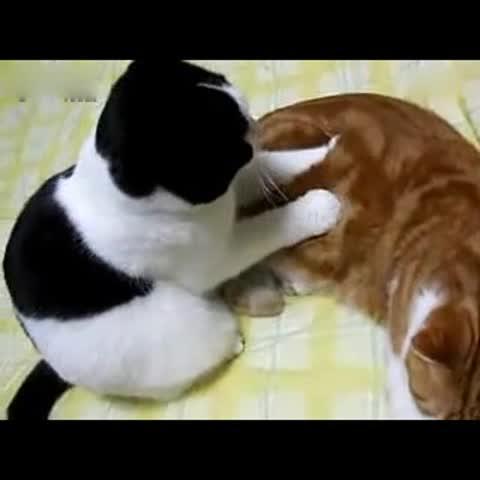 猫咪瘦身按摩#宠物##搞笑##我要上热门