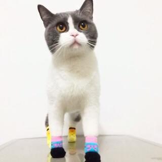 听说套上袜子保暖,喵妹也来试试~结果眼睛不停给放电😳你们数清了吗?#把手套套在脚上##宠物##宠物摇头舞#