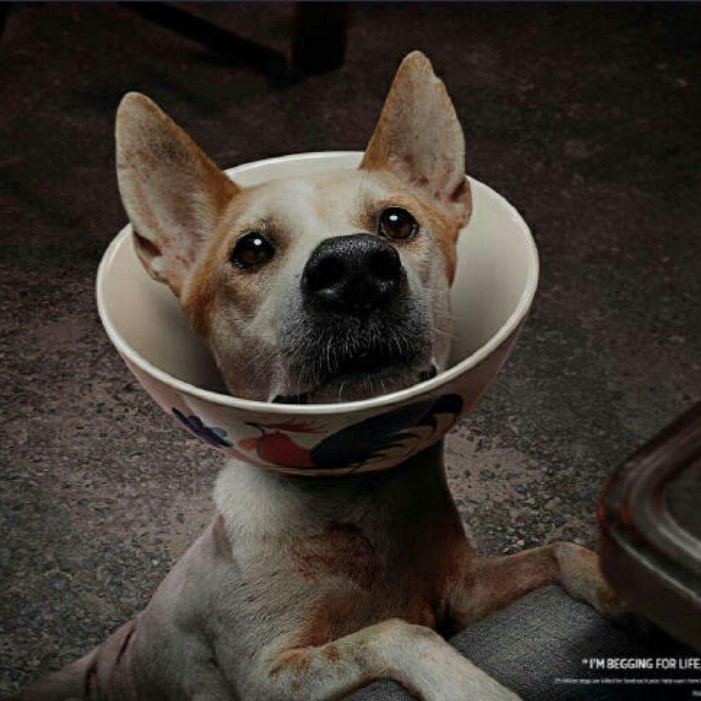 在您与家中狗狗对视的时候,又是否能想象有的狗狗正成为别人的盘中餐?