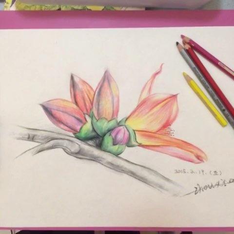 周老师的色铅笔画《木棉花》图片