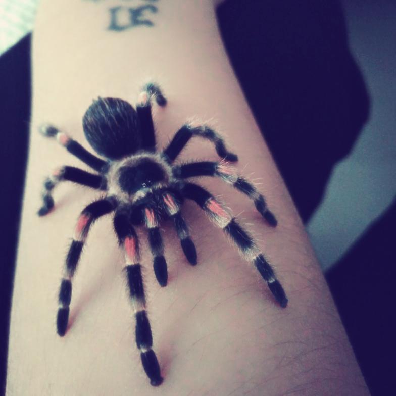 遮盖蜘蛛纹身图分享展示