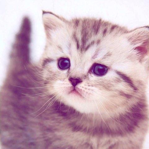 粘土动物猫咪作品
