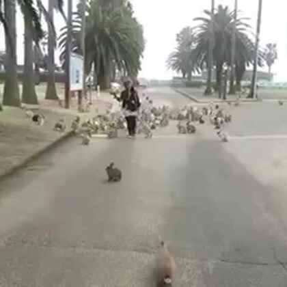 #宠物#好想去这个岛上,抱着零食忘情的奔跑……😍