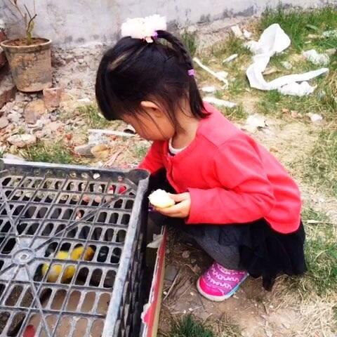 #宝宝#喂小鸡吃面包! - 宝宝视频 - 美萧萧的妈