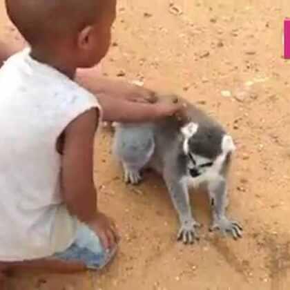 #宠物#继续啊,谁让你们停了,快摸我!😂😂