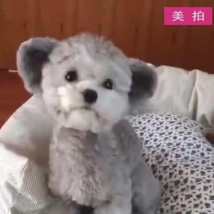 #宠物#太萌了太萌了,看了好几遍!😍😍