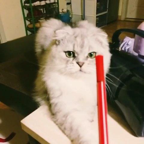可爱小猫娘粘土教程图