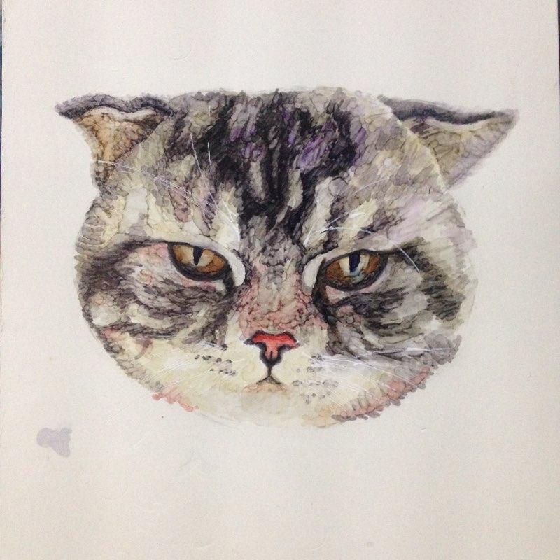 06-06 00:28     #马克笔手绘# 马克笔手绘的猫咪
