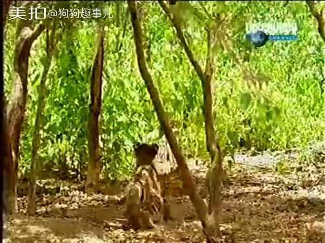 一只调皮的猴子!#搞笑##宠物#