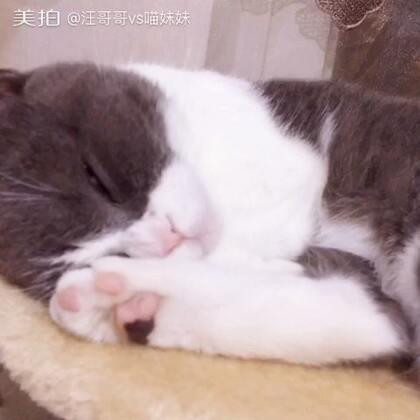 🙄捂脸睡还露大白腿,😉你这是勾引谁呢?#宠物##捂脸杀##家有宠物爱翻白眼#