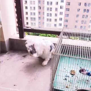 #我家的萌萌兔兔宝贝##偷拍被发现#