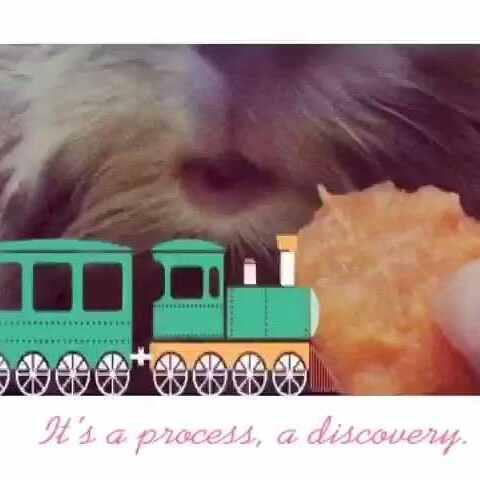 物##萌宠##荷兰猪##视频#洗完澡给片胡萝卜吹狍狍吃货日图片