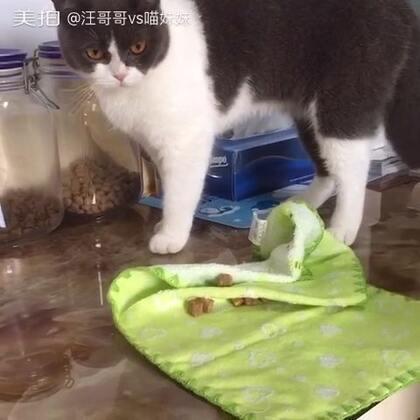 喵小汪每天都很忙🐾因为会把吃不完食物统统埋起来,等着下顿吃不浪费😂#宠物##宠物埋食#