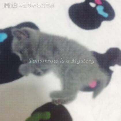 暂未取名的奶猫的美拍-3个美拍短视频技巧咬视频图片