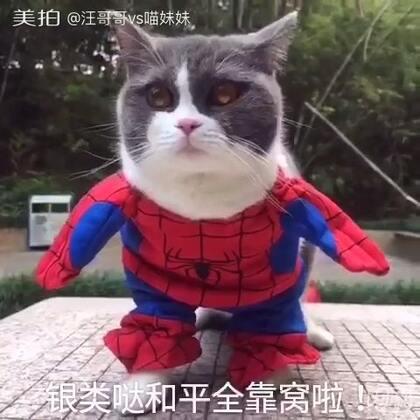 喵妹秒变蜘蛛侠!或是秒变纸猪虾……仔哥最后也乱入!😂😂😂#宠物##给宠物装扮#