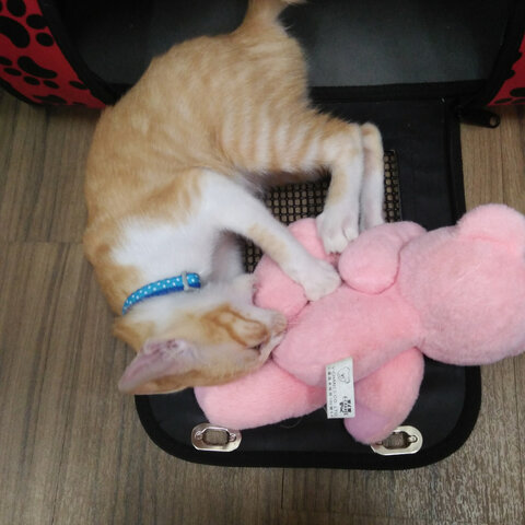 熊熊:我脚快断了啦#乐园##喵星人#-萌宠宠物包表砖情搬金图片
