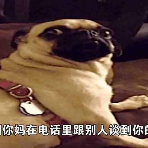 #搞笑#一大波萌萌哒#表情#表情来袭,里面有自由自在的宠物图图片