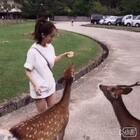 在奈良喂小鹿啦~~