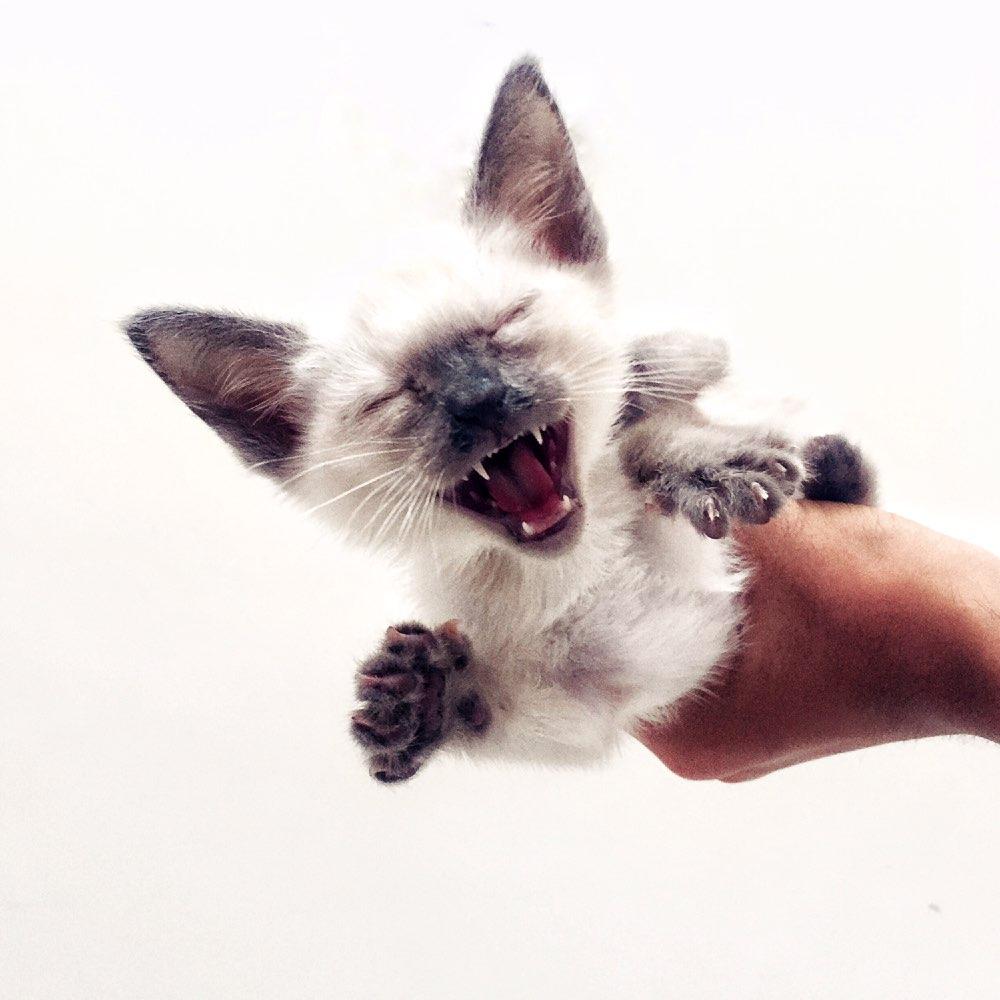 关爱流浪动物# #救助流浪动物# #宠物# #喵星人# #汪星人# #流浪猫