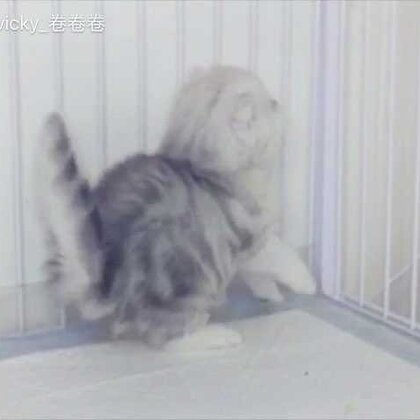 刚满月的萌喵宝宝😽😽😽可爱到爆炸~~#宠物#