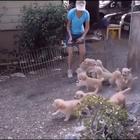 #宠物#笼舍门打开,一窝7周大的金毛宝宝们蜂拥而上冲向主人,并对其进行了残忍的围攻……萌的心都要化了!被这么一窝毛球围攻简直不要太幸福!☺