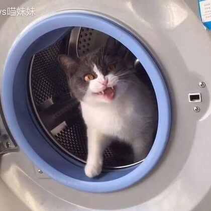 洗衣机:快!进来阿妹~我掩护你!🤐喵妹:快,敌人就快到来~😱洗衣机:敌人就在眼前😵喵妹:啊,好强大的敌人啊,我的身体不听使唤了😭铲屎官:😒玩个逗猫棒,至于吗。。。#宠物##喵星人##喵妹爱呲牙#