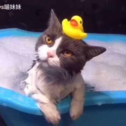 让大家久等了,喵妹版泡泡浴🛀好酥服 头顶大法太牢固👍🏻铲屎的唯有帮忙弹走小鸭子嘞😝#宠物##给宠物洗澡##喵汪洗澡记#