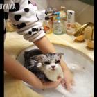出月子的mika终于可以洗澡啦!遇水就下半身瘫痪的mika洗澡很配合呢😂