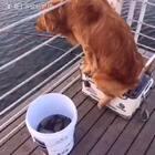 #宠物##钓鱼##搞笑#