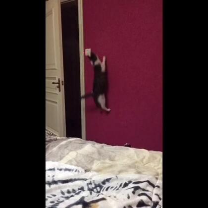 #厉害了我的猫#家里有一只可以关灯的喵,算不算厉害?😌😌😌#宠物#