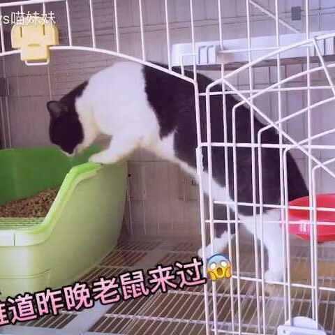 【汪哥哥vs喵妹妹美拍】😱😱妹子上厕所发现惊天秘密😵是...