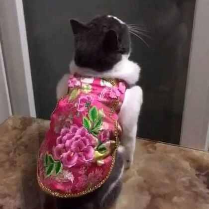 勇敢扑飞虫的女孩,封面的阿妹在照镜子😜#宠物##过年穿这样#