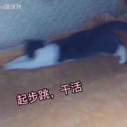 家有调皮可爱的喵星人😁铲屎婆铺床她总会来帮忙😊还铺的有模有样👏🏻小屁股扭得也是没sei了😍#宠物##看看你家的猫多长##宠物内心小剧场#