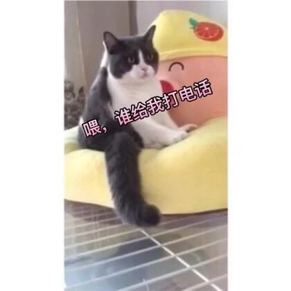 02-17 19:39转发的美拍视频
