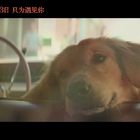 《一条狗的使命》终极预告 狗狗贝利历经生命轮回