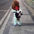豆豆:干掉熊猫我就是国宝🐼😂#宠物#