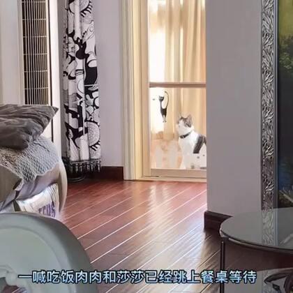#宠物#指甲才剪过,门不太好抠(不晓得谁把猫误关在外面),一只猫傻坐在外面指望有人帮他开门……可是这个时候麻麻喊吃饭了,这可是天大的事呀😆,越说吃饭越急呀😁,没办法自己硬着头皮把门抠开了。
