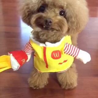 #宠物#音乐太魔性,大家别介意啊😄😄似乎和这个可爱的麦当劳小女孩不太配呀😅😅#宠物装扮大赛#